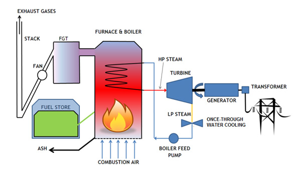 Biomass Energy Energy Unit Assessment